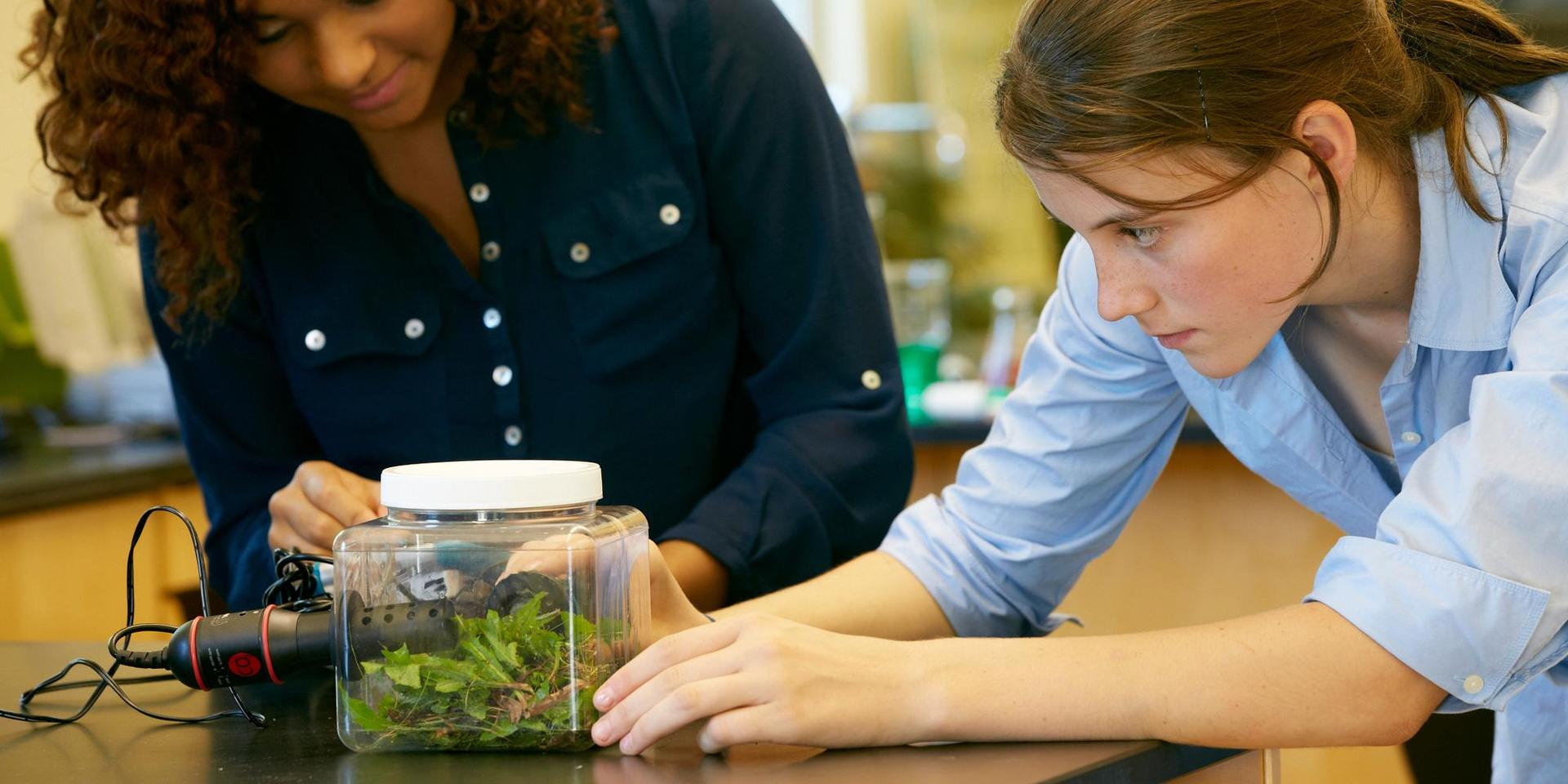 学生们正在研究植物在一个罐子里的气体排放.