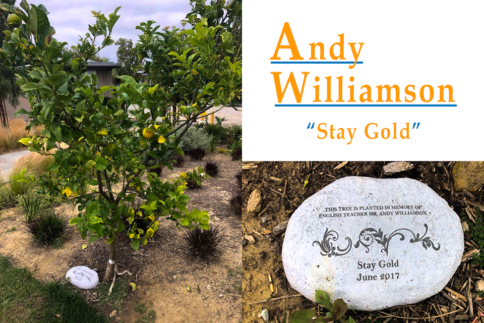 """Photo of Andy Williamson's Lemon Tree and an engraved stone commemorating him and his """"Stay Gold"""" mantra"""