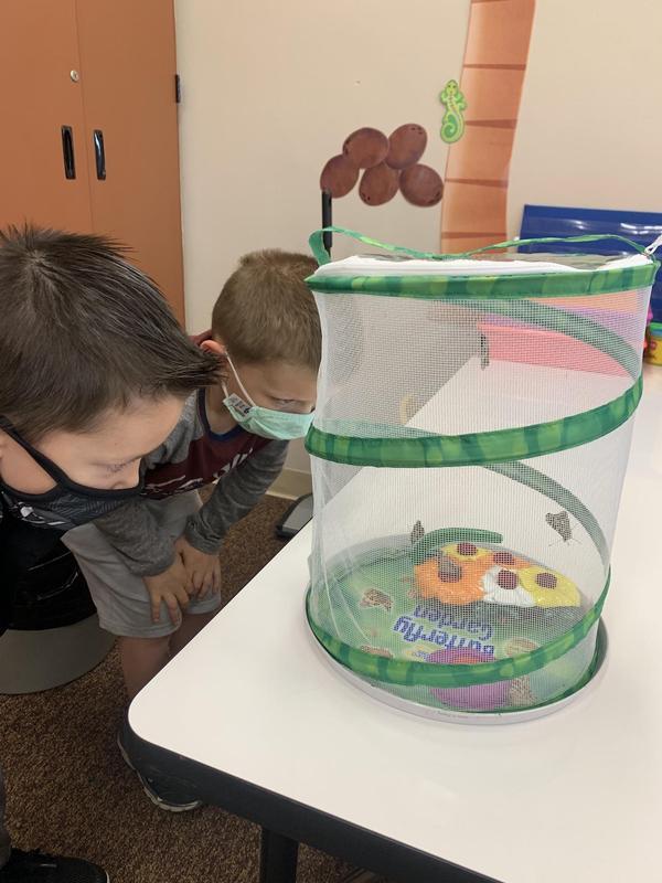 students observing caterpillars
