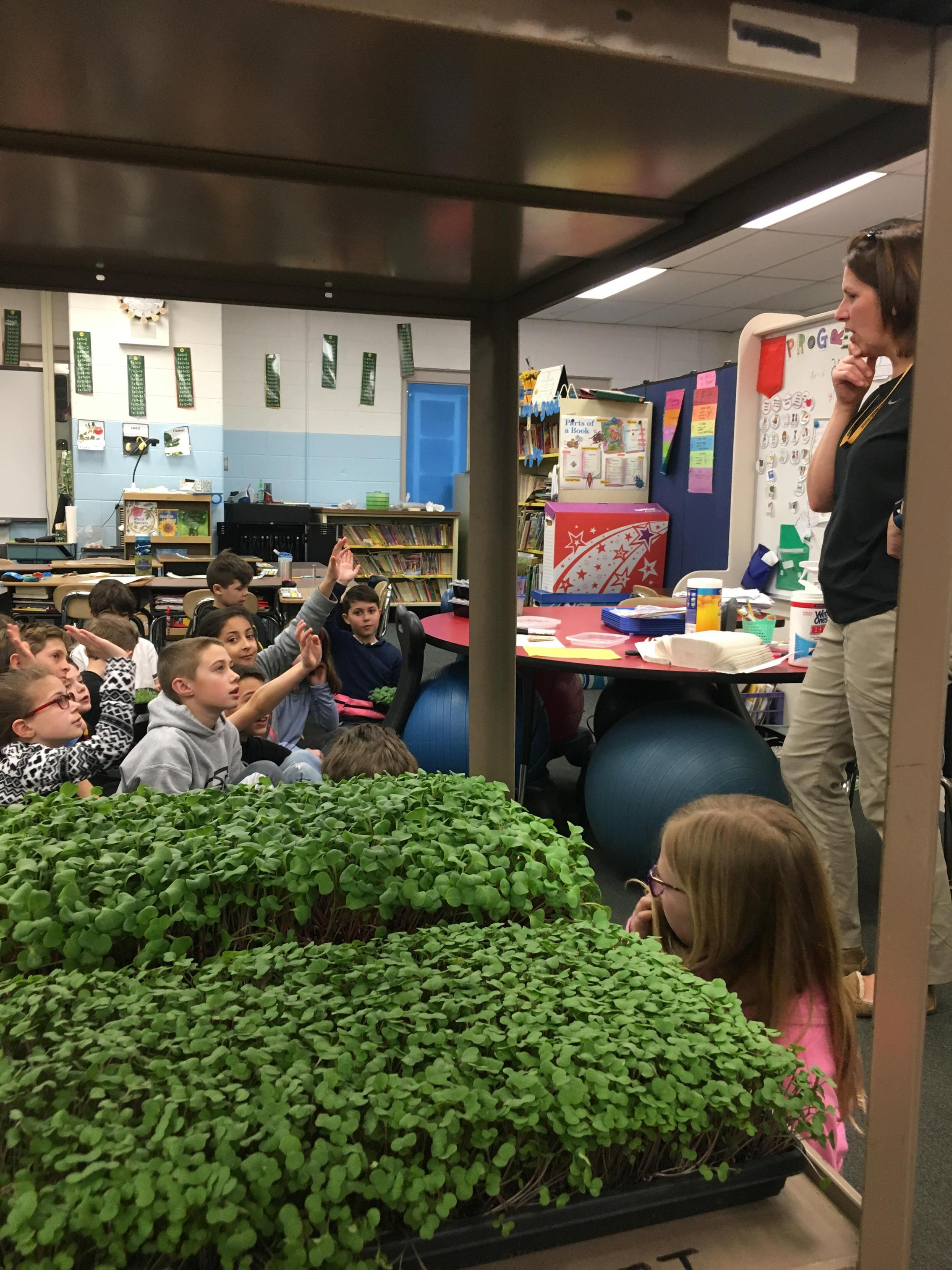 Gr 3 Farming Turtles Micro Greens Tasting