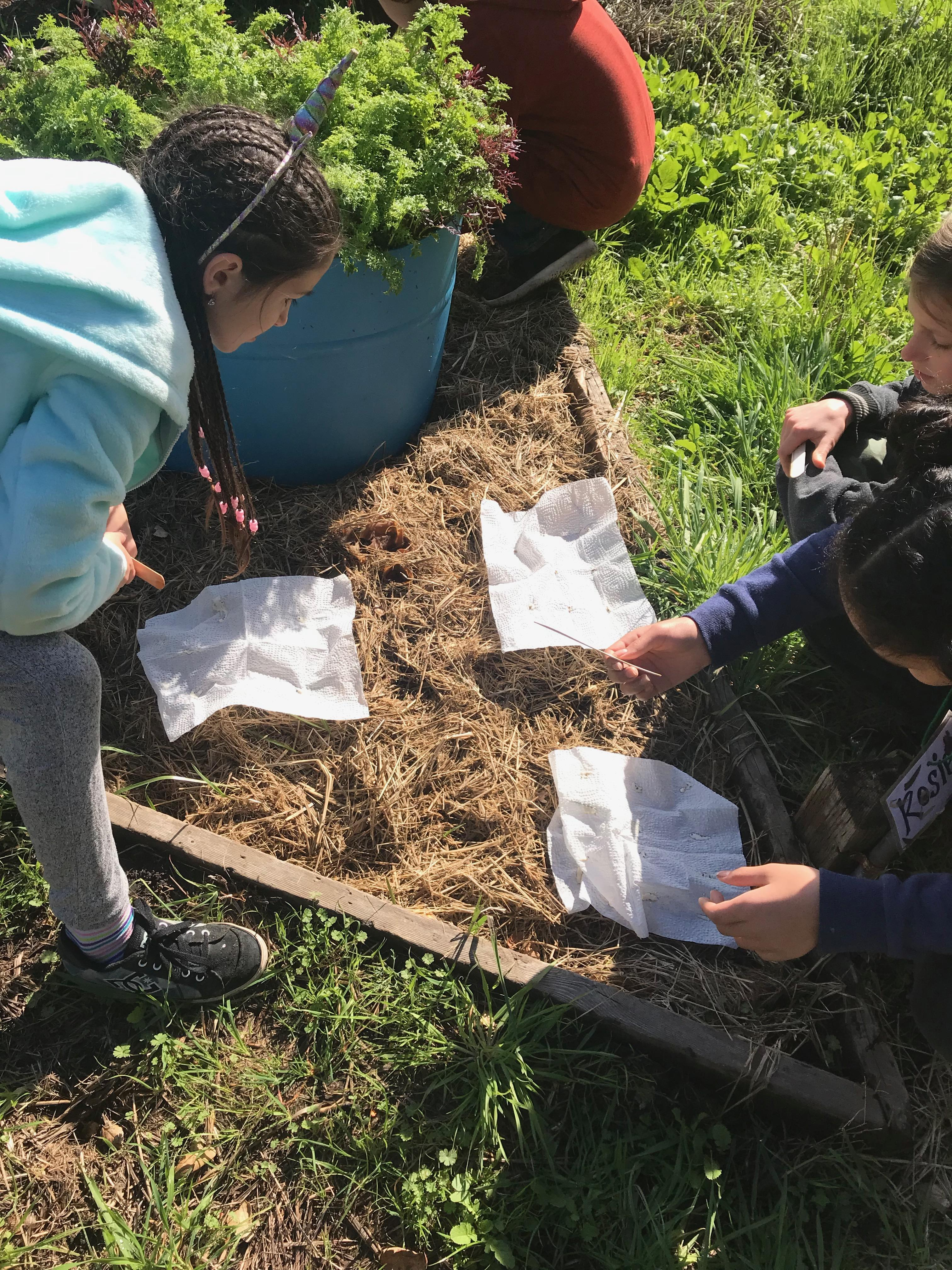 Preparing Seeds in the Garden