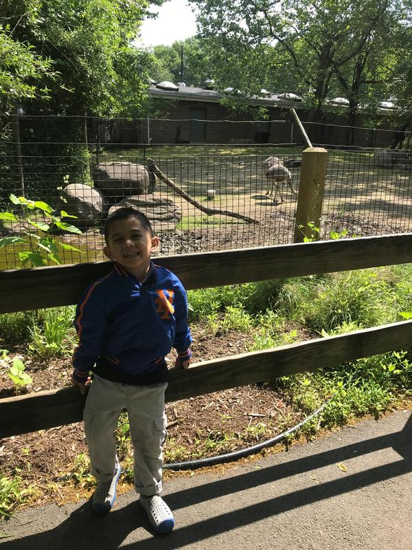 boy standing in front of caged area of two ostriches