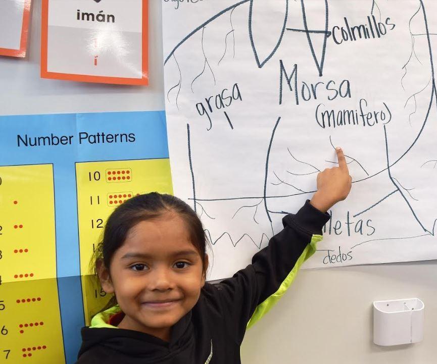 kinder girl pointing at a diagram