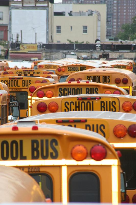 back of yellow busses with the words school bus