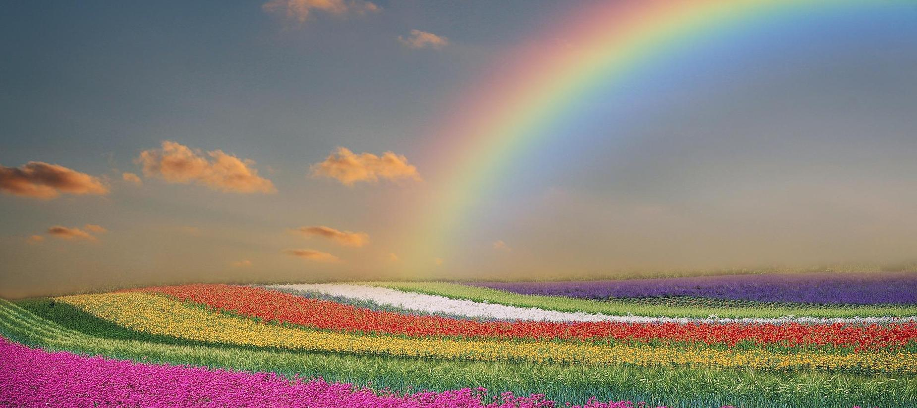 field of flowers and rainbow in sky