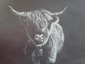 Highland Cattle.jpg