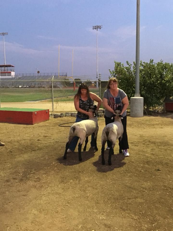 lamb practice