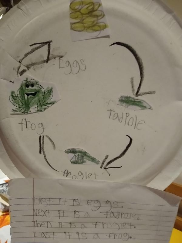 Frog cycle on paper plate