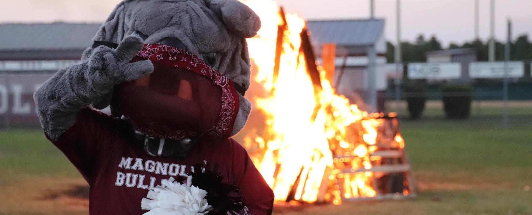 Bulldog at the bonfire
