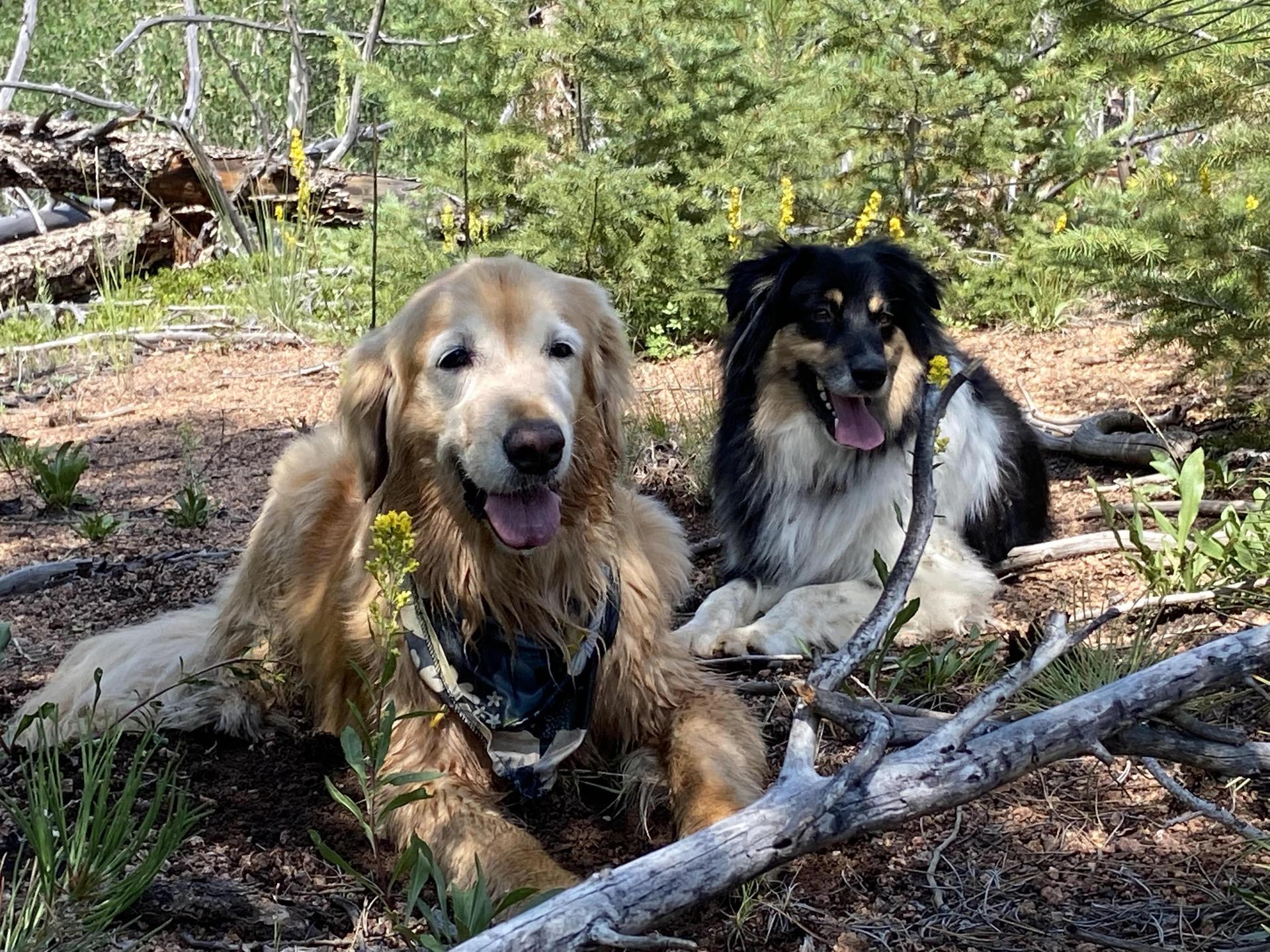 My dogs