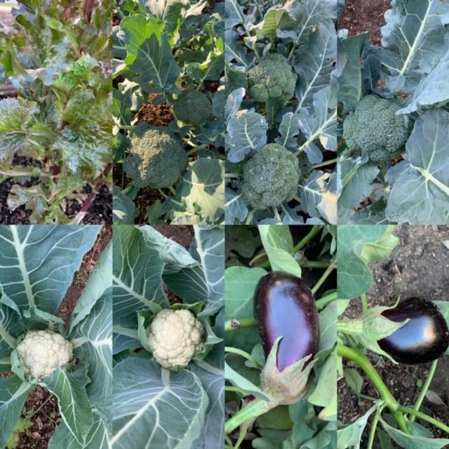 Look at those eggplants!