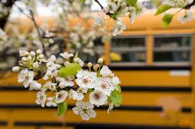 Flowers with school bus