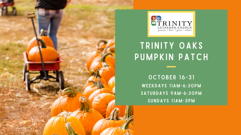 The Pumpkin Patch is Open! Featured Photo