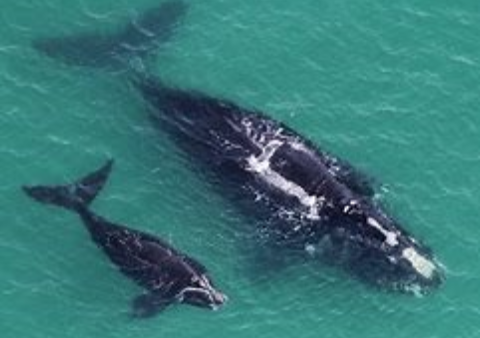 two whales