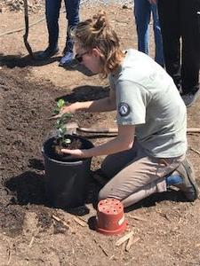 person kneeling near plant container with plant in hand