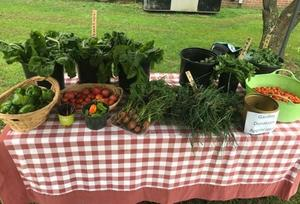 The Tamaques PTO Garden Committee held a complimentary Farmers Market on September 7, offering students and their families tomatoes, peppers, radishes, kale and other vegetables and herbs from the school's garden.
