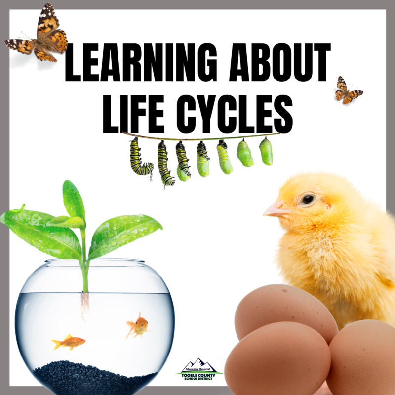 Learning about Life Cycles in the Classroom Thumbnail Image