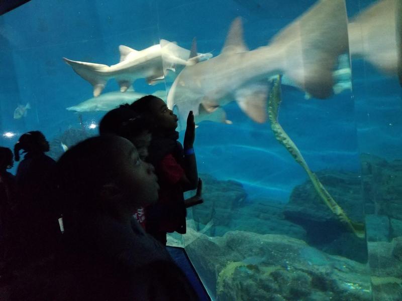 BBL 2 Aquarium Visit Featured Photo