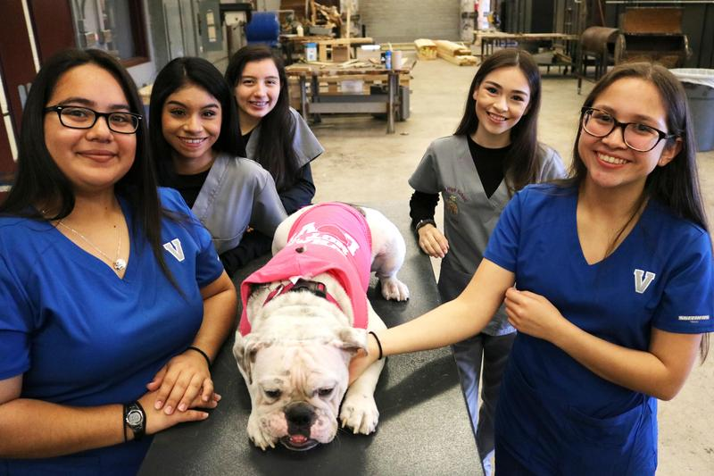 VMHS and MHS Veterinary Science students