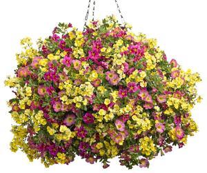 hanging flower basket.jpg