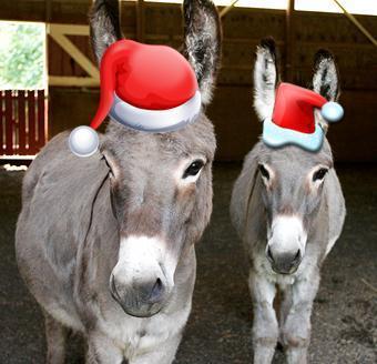 Happy Holidays from the Donkeys!