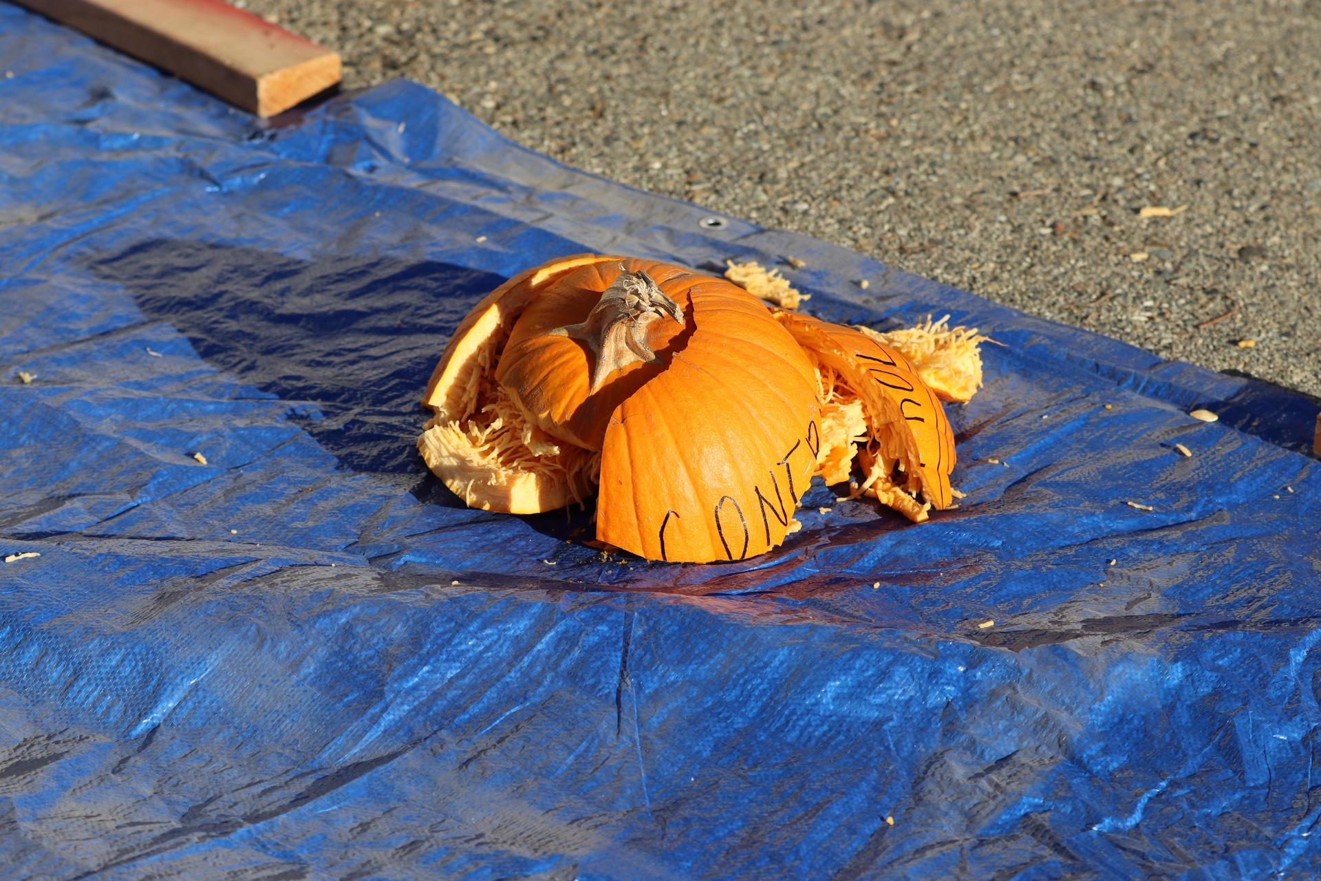 Control pumpkin result.