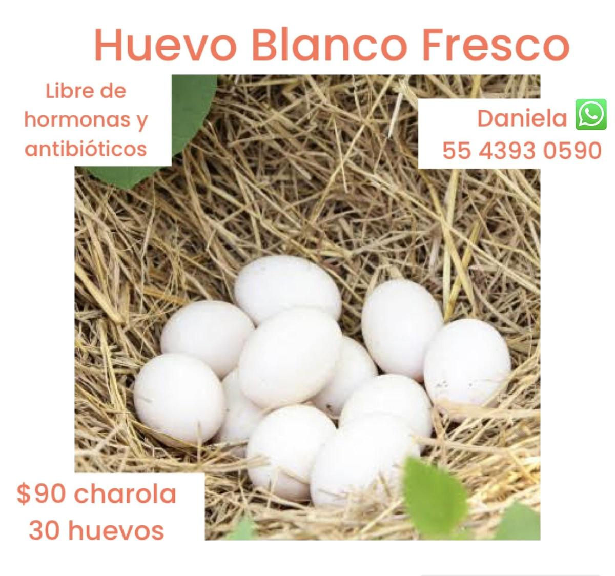 Huevo libre de hormonas