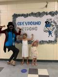 Greyhound strong
