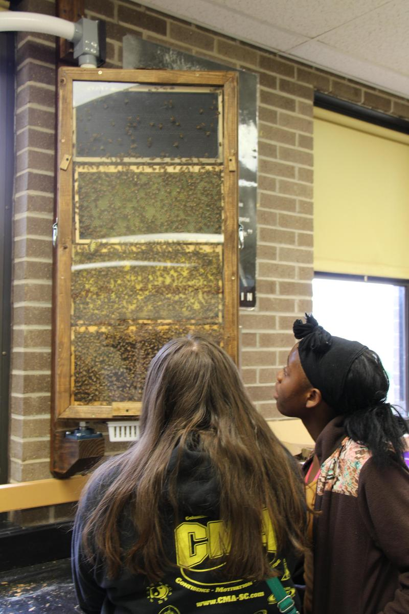 B-L High School students Hailee Brock (left) and Ja'Zaria Stewart (right) check out the new observation beehive that was recently installed in teacher Allison Cook's science classroom.