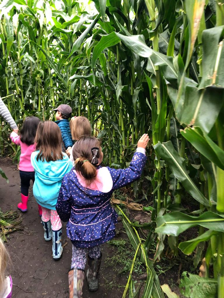Corn stalks and children with their backs to the camera