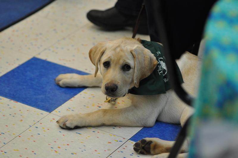 Pet Service Visit Featured Photo