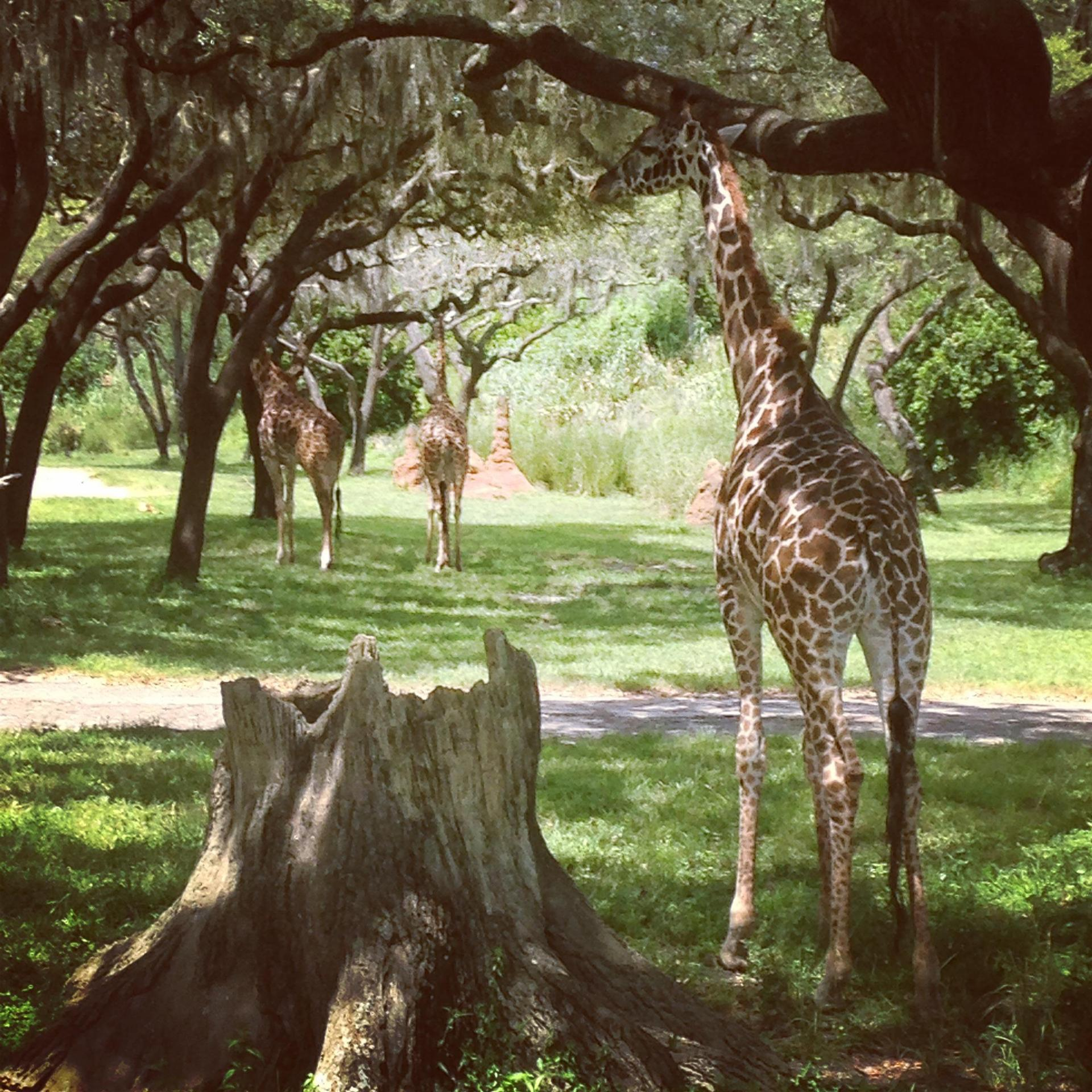Animal Kingdom!