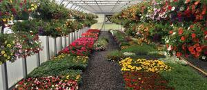 FGHS Plant Sale