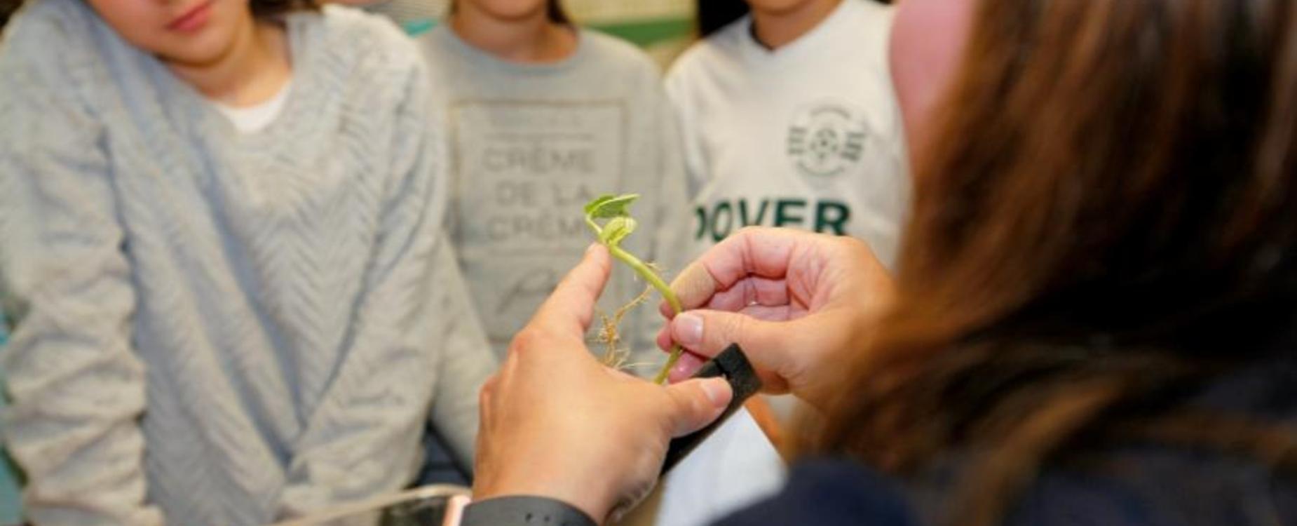 Teacher showing a plant