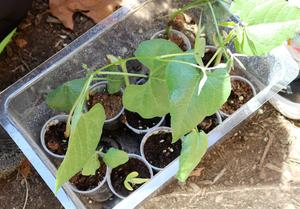 Photo of seedlings.