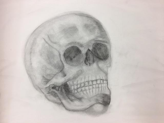 Shelby's Skull Drawing