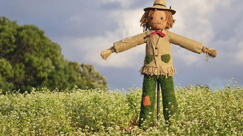 Straw Scarecrow in a field