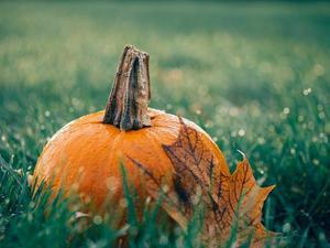 pumpkin-1030817_640.jpg