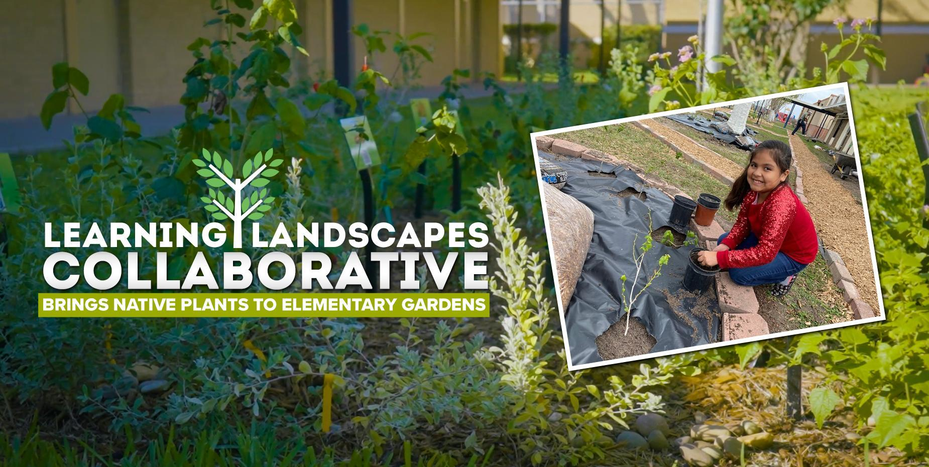 Learning Landscapes Collaborative brings native plants to elementary gardens