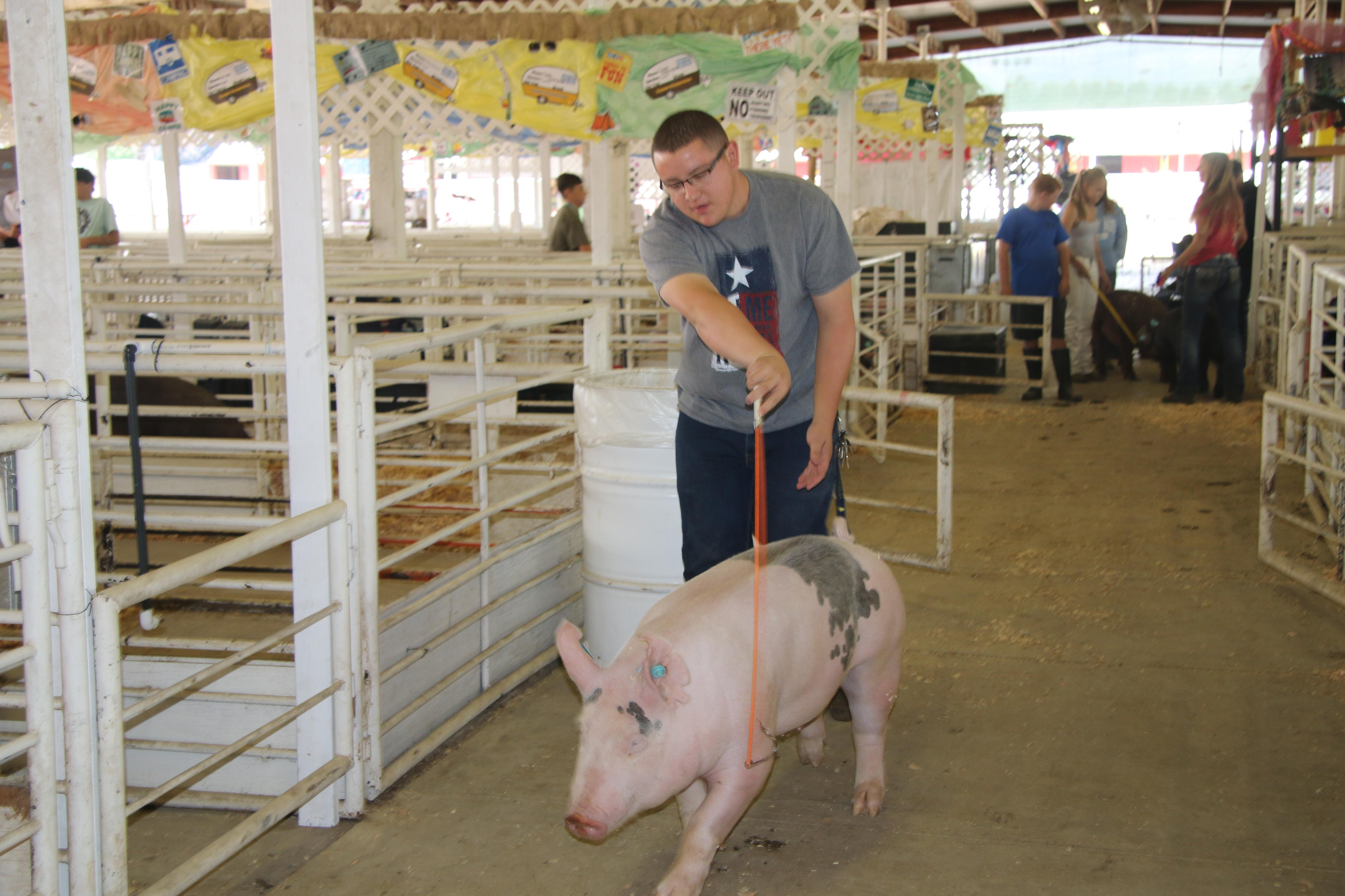FFA student with market swine