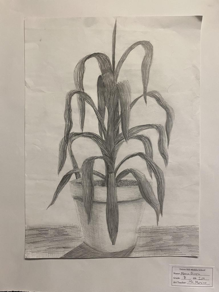 sketch of plant in black and white
