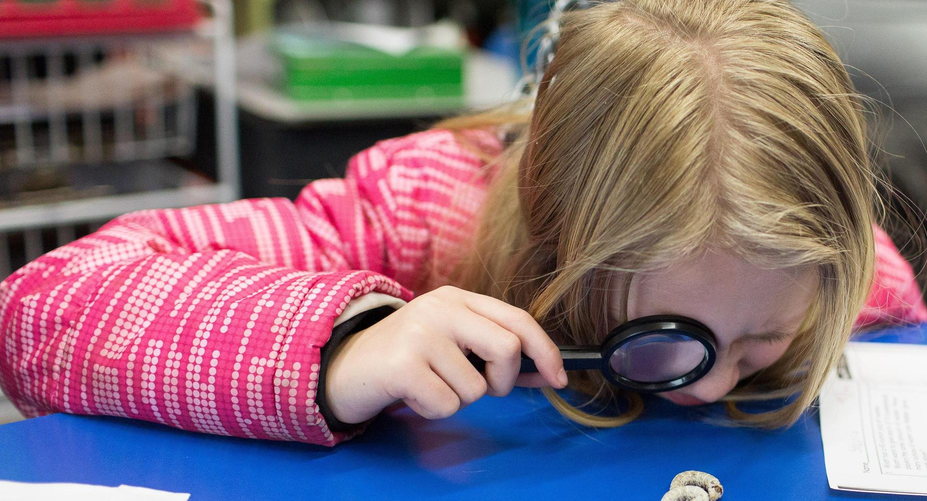 3rd Grader looking at a silk worm with a magnifying glass