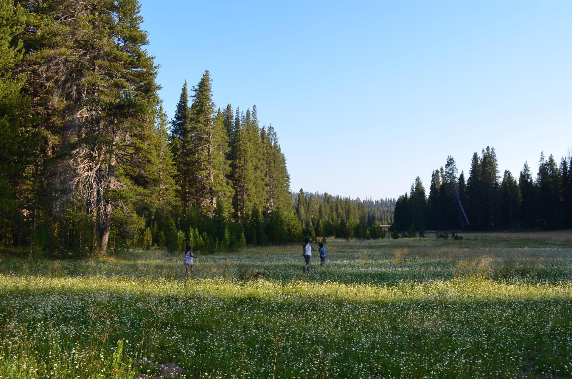 A Meadow in Sequoia National Park