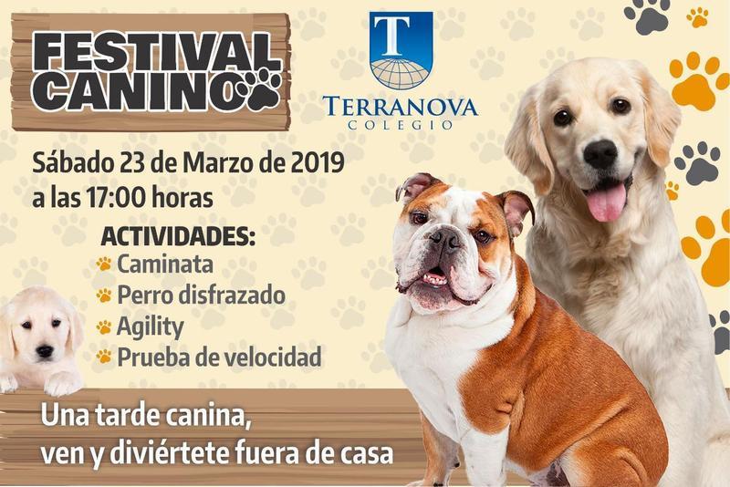 Festival canino 2019 Thumbnail Image
