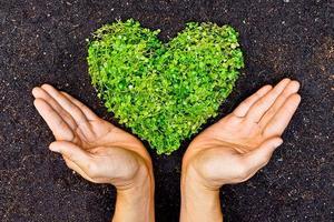 Enrollment Hands with Heart.jpg