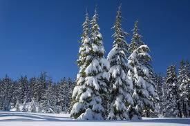 snow on trees.jpeg