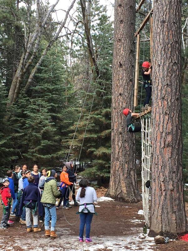 Students climbing trees