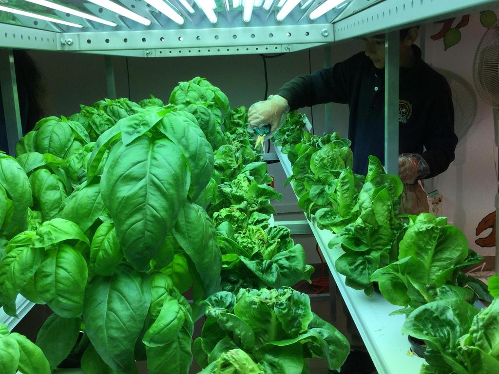 looking at the plants under the lights in the hydroponics lab