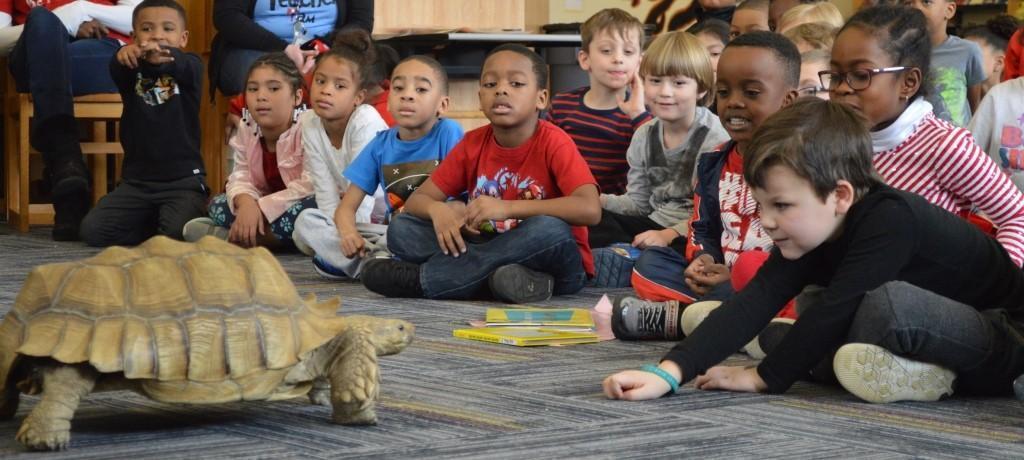 kindergartners meet tortoise