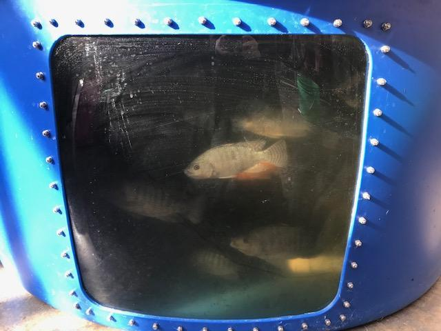 Fish in a hydroponic tank visible through window